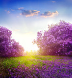 Fototapety spring landscape