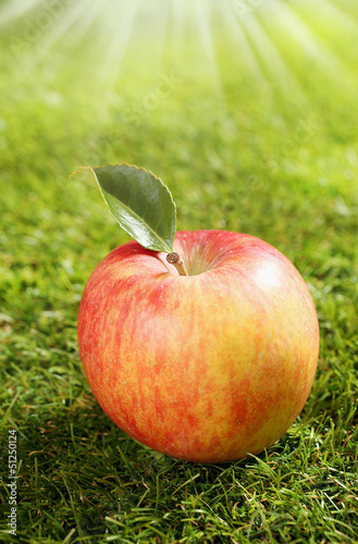One red apple on green grass