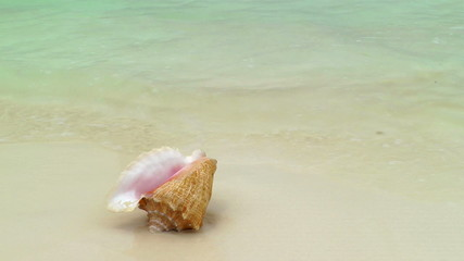 Conch shell on tropical beach, Cancun, Mexico