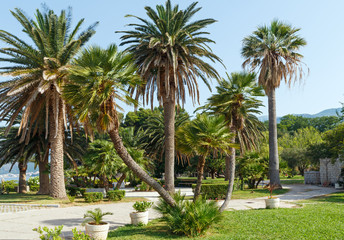 Summer park with palm trees (Montenegro)
