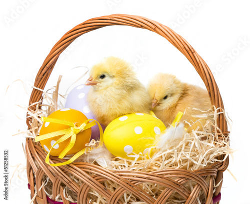 a basket with easter eggs and chickens isolated
