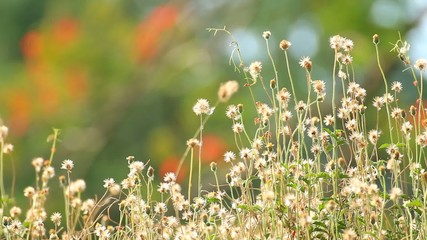 Grass flower field