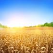 Leinwanddruck Bild - Golden Wheat Field