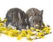 two newborn rabbits and spring branch