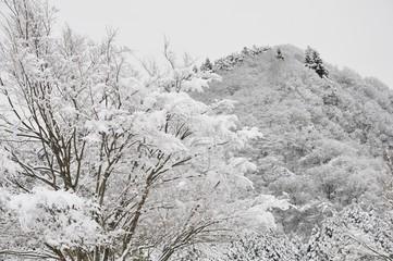 樹木と山の雪景色