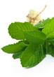 Fresh mint - Menta fresca