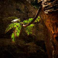 Palm tree growing on vertical wall inside cave