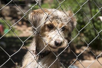 Mischlingshund hinter einem Zaun