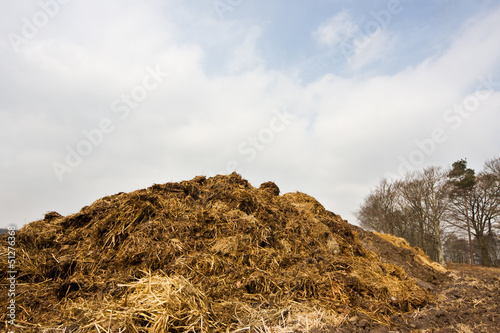 Heap of horse manure