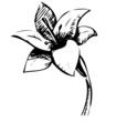 Lily flower sketch illustration