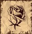 Vintage rose bud sketch illustration
