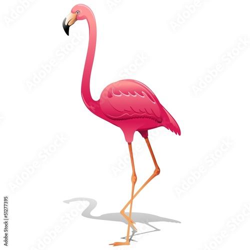 Foto op Aluminium Flamingo Pink Flamingo-Fenicottero Rosa-Vector