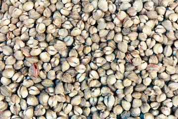 Fresh raw clams a market at Thailand, Asia