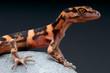 Cave gecko / Goniurosaurus orientalis
