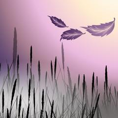 Morning twilight fog with reeds