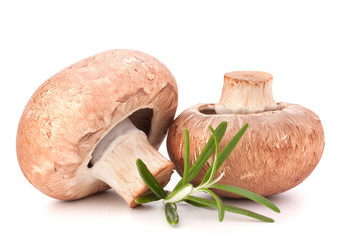 Brown champignon mushroom and rosemary leaves