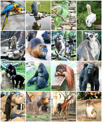 Collage of different animals