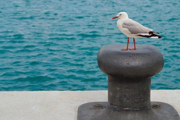 Gaviota en el puerto