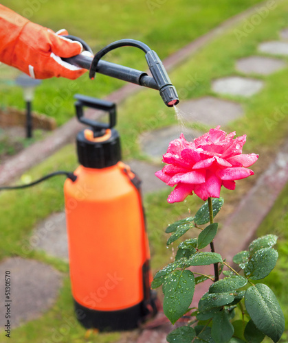Protecting plant from vermin with pressure sprayer