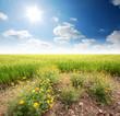 green grass blue sky flower rainbow
