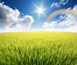 green grass blue sky flower rainbow