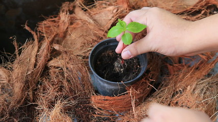 Sprout , planting tree