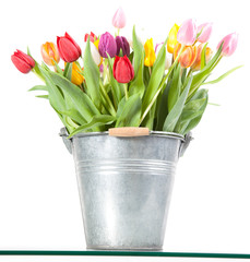 Colorful tulips in a metal bucket isolated on a white background