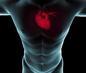 Uomo cuore radiografia