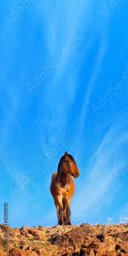 Wild Mustang Horses