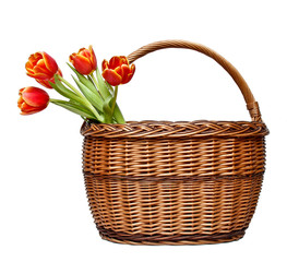 Basket with blooming tulips