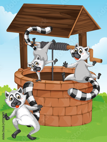 Three lemurs at the man-made well