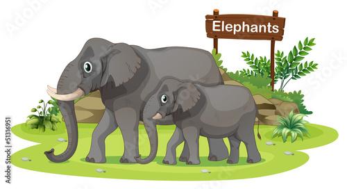 Two elephants near the signboard