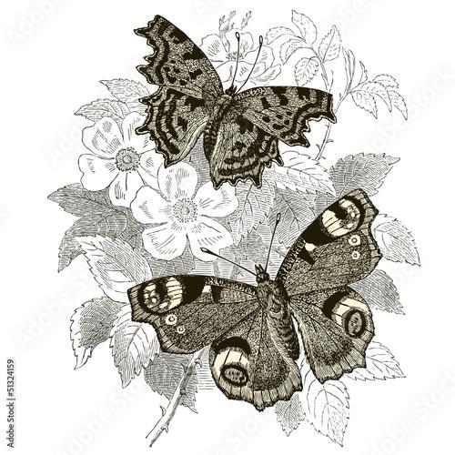 Peacock & Gamma Butterflies