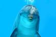 Leinwandbild Motiv Dolphin Look