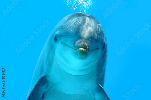 Foto op Canvas Dolfijnen Dolphin Look