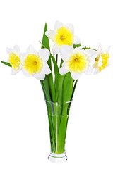Beautiful spring three flowers : narcissus (Daffodil).