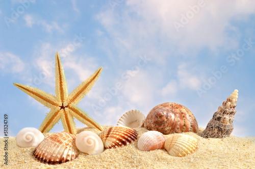 Muschel in beach sand, himmel