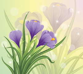 Spring crocus flowers on a pastel background.