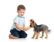 child feeding dog isolated on white