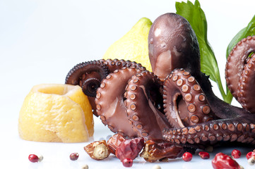 Large boiled octopus