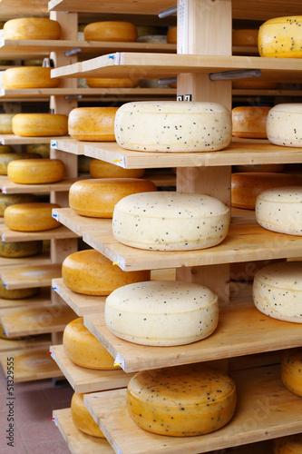 alter und junger käse