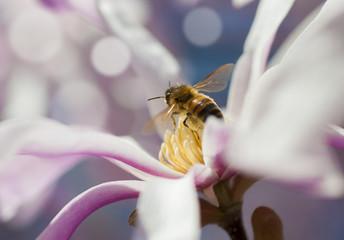 ape polline 2