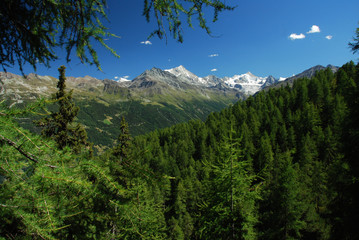 Forêt de pins, Val d'Anniviers, Suisse