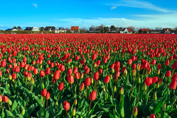 Red Flower Plantation