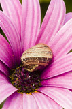 Purple daisy flower and ground snail