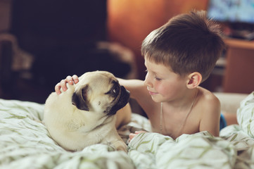 lying on a soft bed with her boy friend breed pug puppy