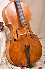 Close up of a violoncello on beige background
