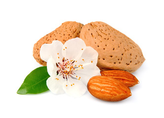 Almonds with leaves and flowers
