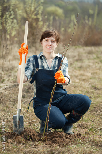 Female farmer  planting   shrubbery