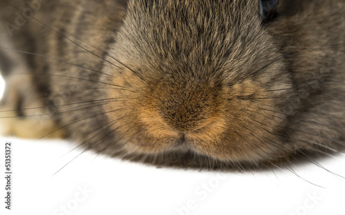 rabbit mouth and nose